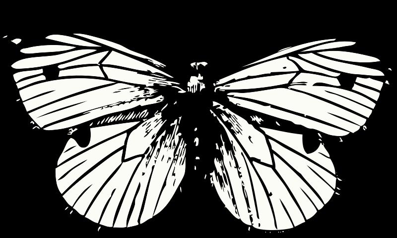 Free cabbage moth