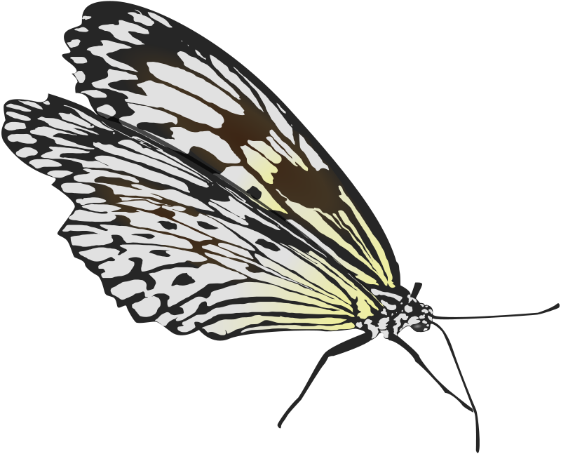 Free clipart butterfly, Free butterfly Transparent FREE for download on  WebStockReview 2020