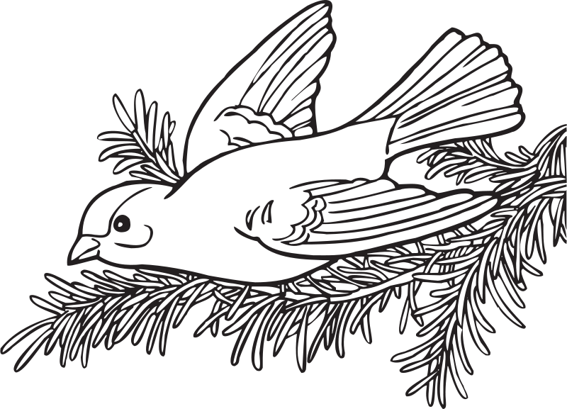 Free Coloring Book Willow Goldfinch