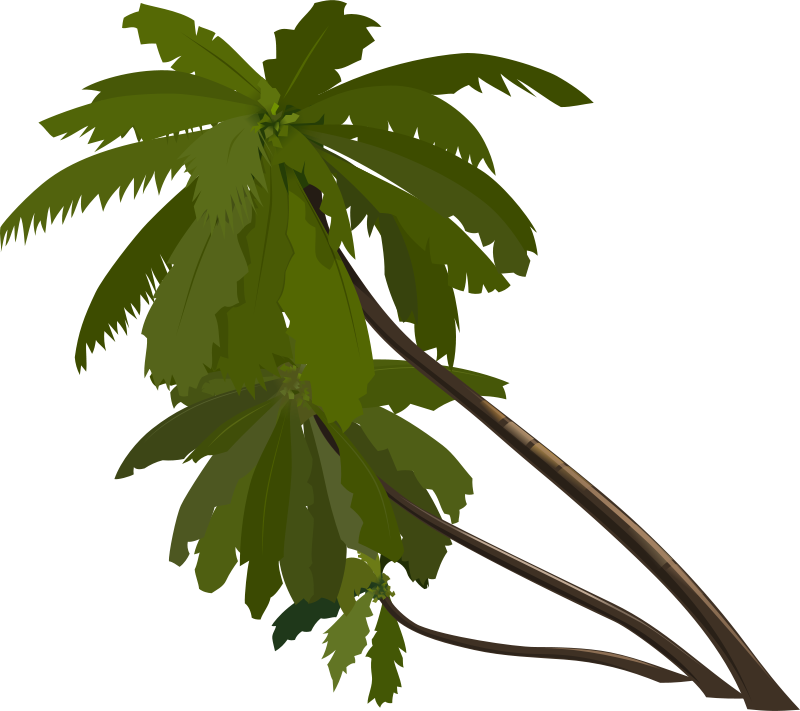Free palm_trees
