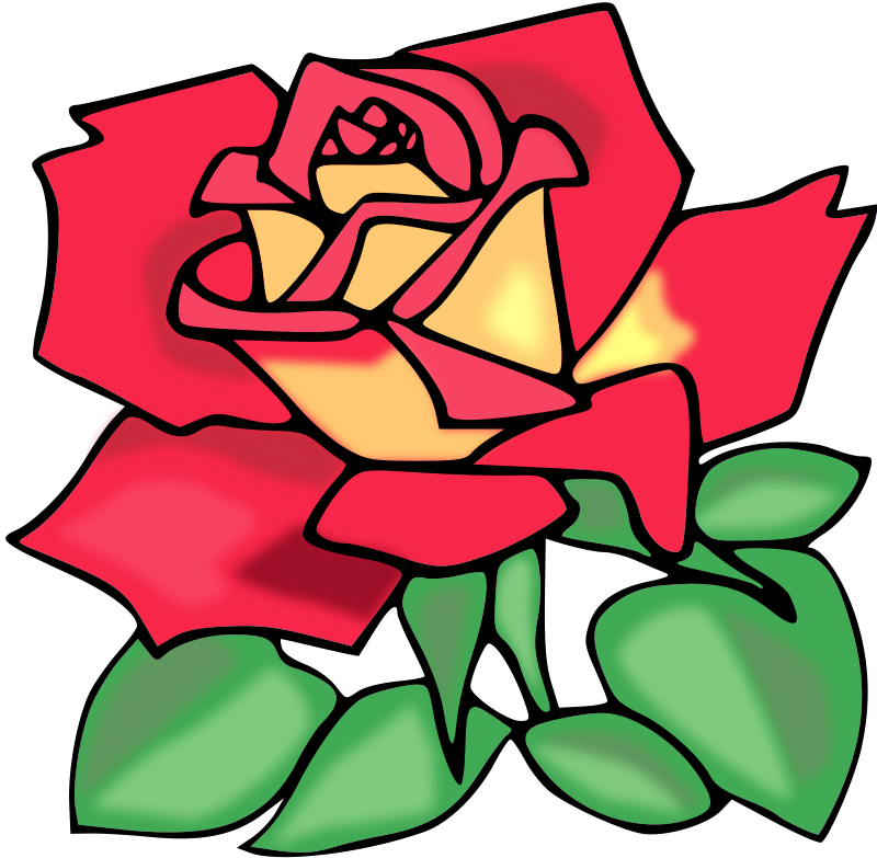 Free Red rose