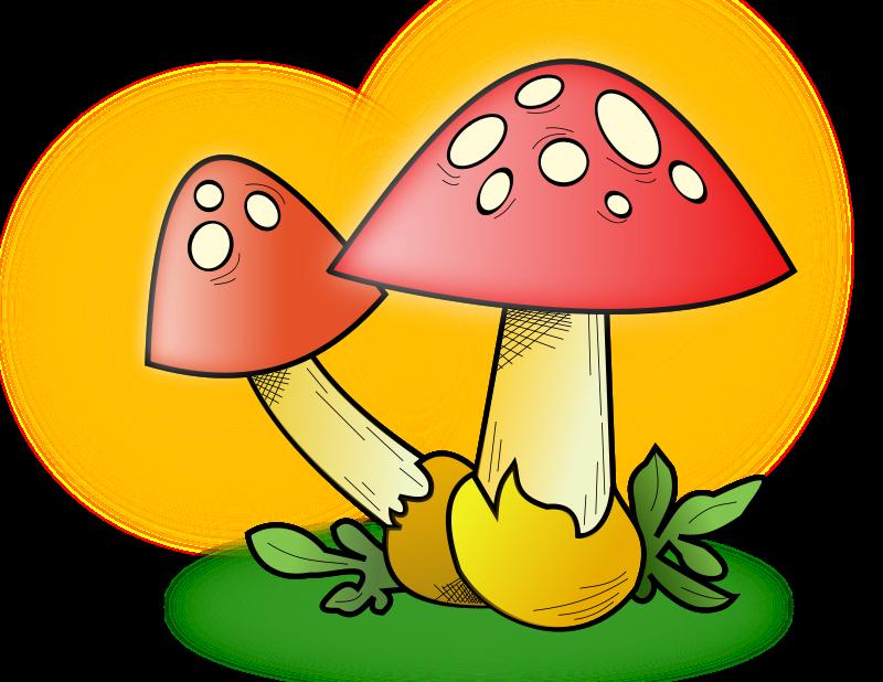 Free Mushroom ???