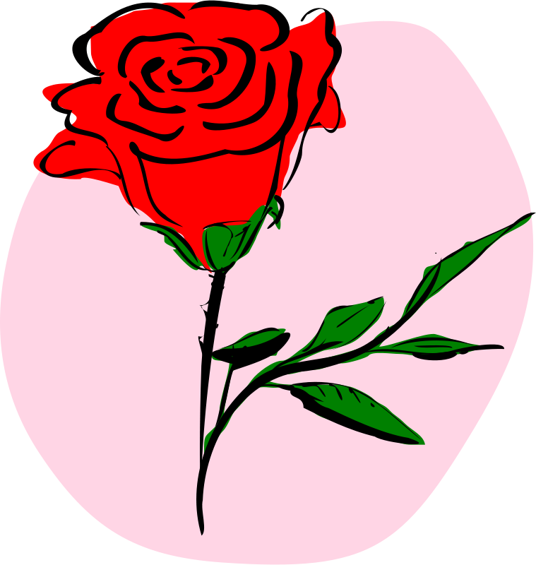 Free coloured rose