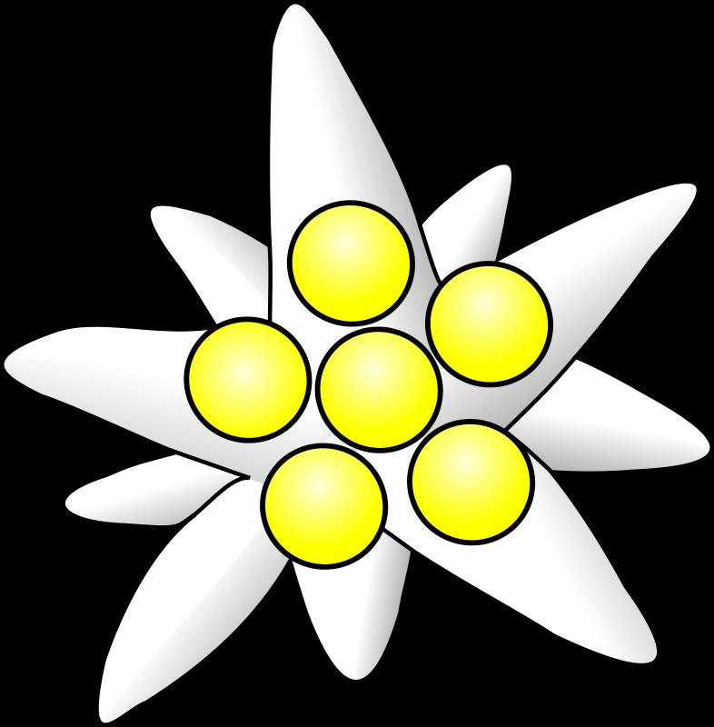 Free edelweiss