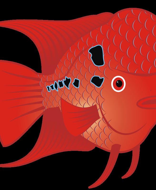 free clipart flowerhorn fish 2 danz rh 1001freedownloads com Baby Flowerhorn Fish Flowerhorn Fish Care