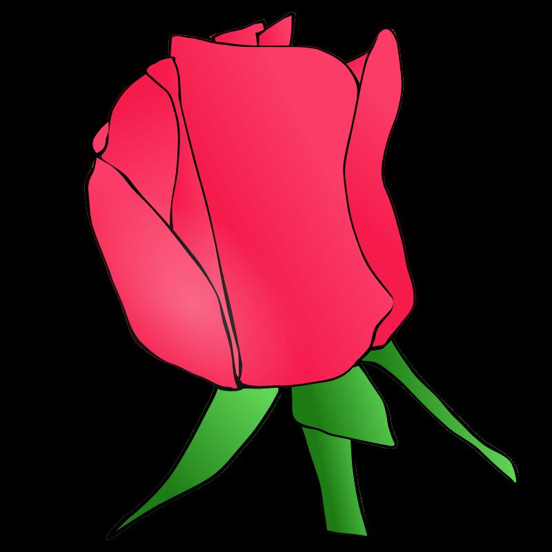 Free Rose