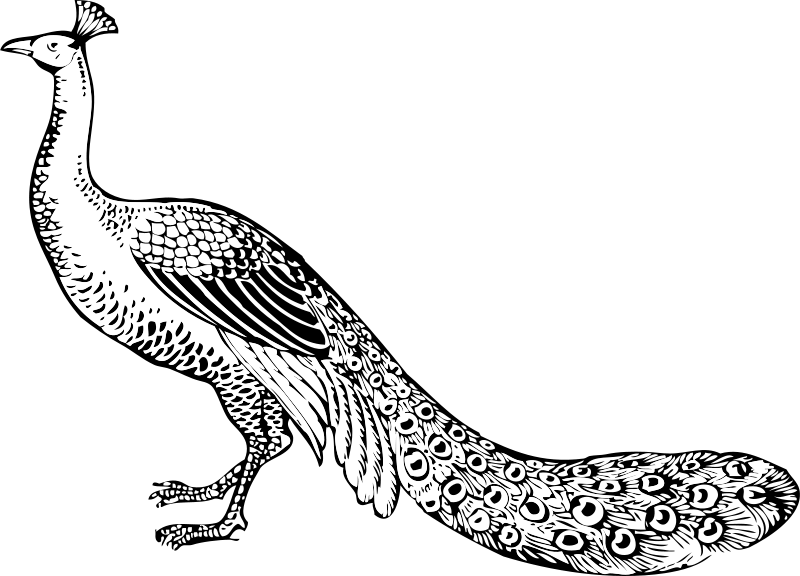 Free Clipart: Peacock | johnny_automatic