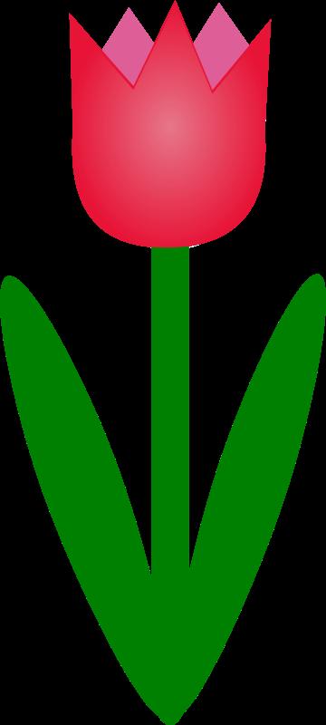 Free tulip1