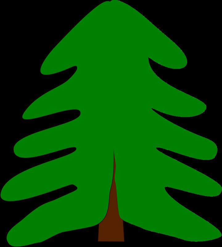 Free spruce