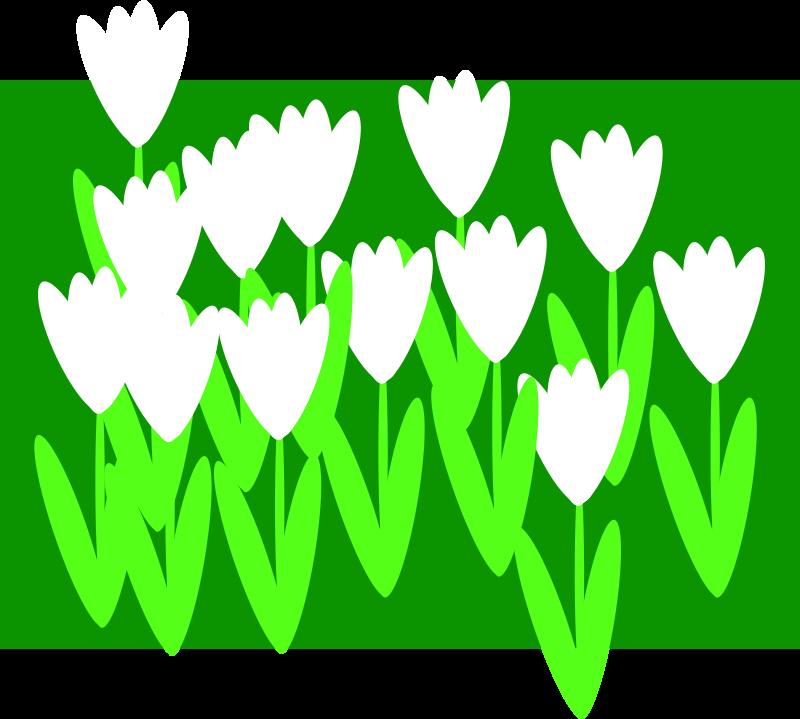 Free spring1
