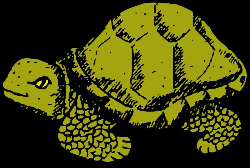 Free tortoise