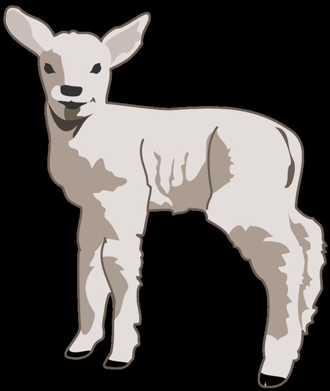 Free Clipart: Young lamb | molumen