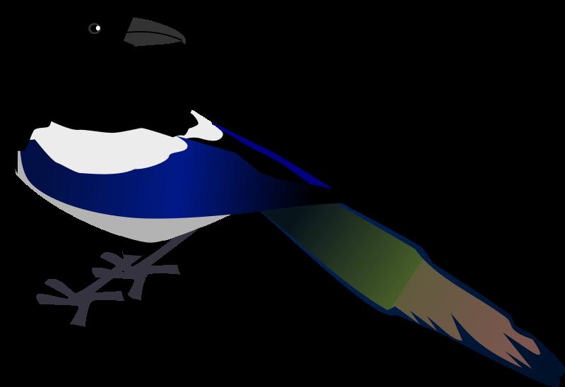 Free Clipart: Magpie   zeimusu