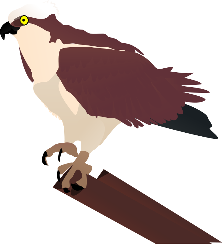 Free Clipart: Osprey | johnny_automatic