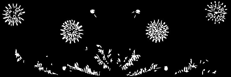 Free dandelions