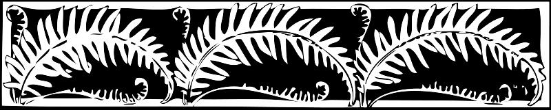Free fern border