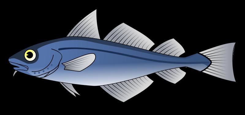 Free Codfish