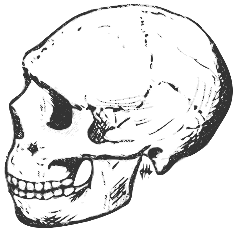 Free Amud skull (grayscale)
