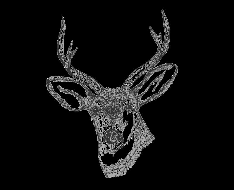 Free Deer Head