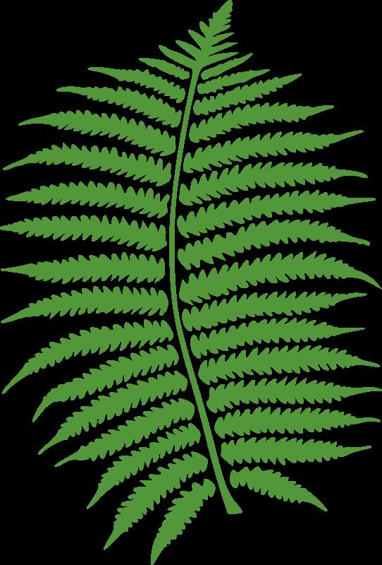 Free fern