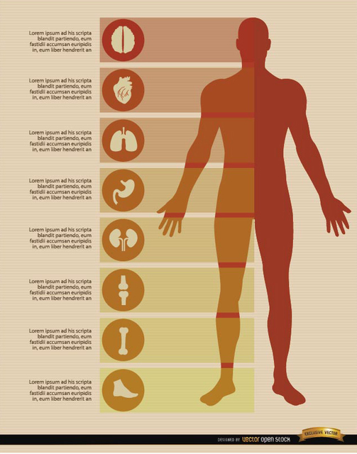 Free Male body infographics elements