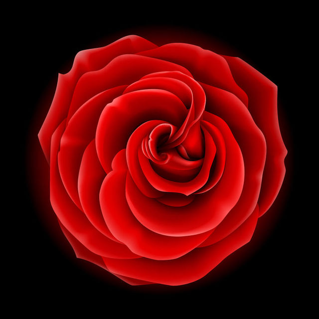 Free Realistic Full Blossom Red Rose