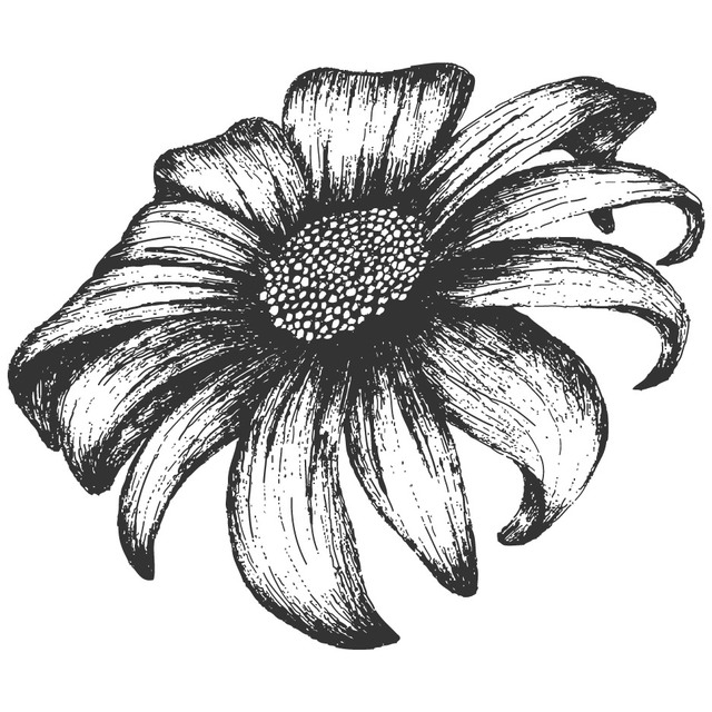 Free Grungy Hand Drawn Sunflower