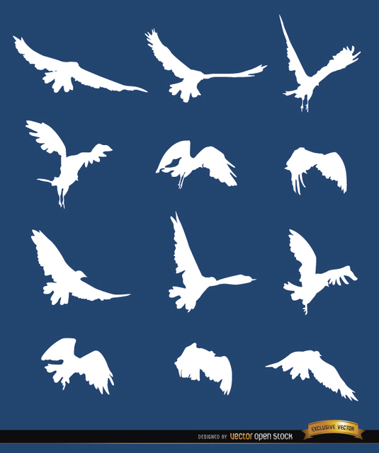 Free Flying bird sequence silhouettes