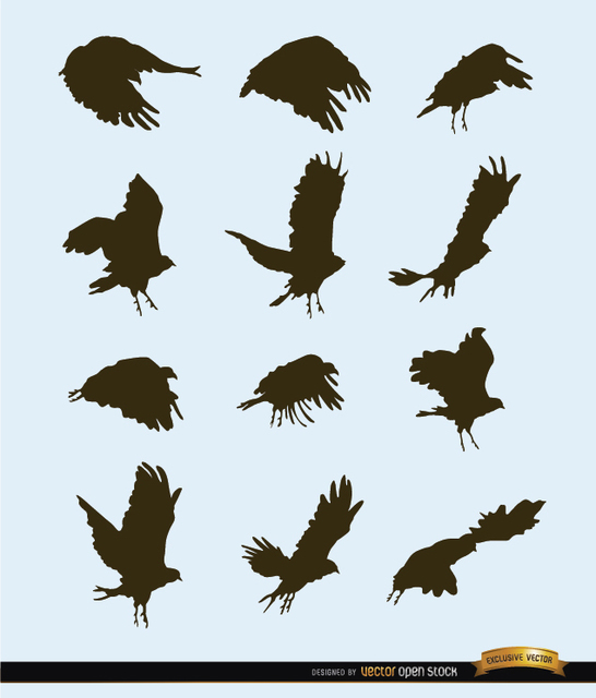 Free Flying bird motion silhouettes