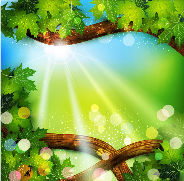 Free Tree Branch Frame with Sunlight Background