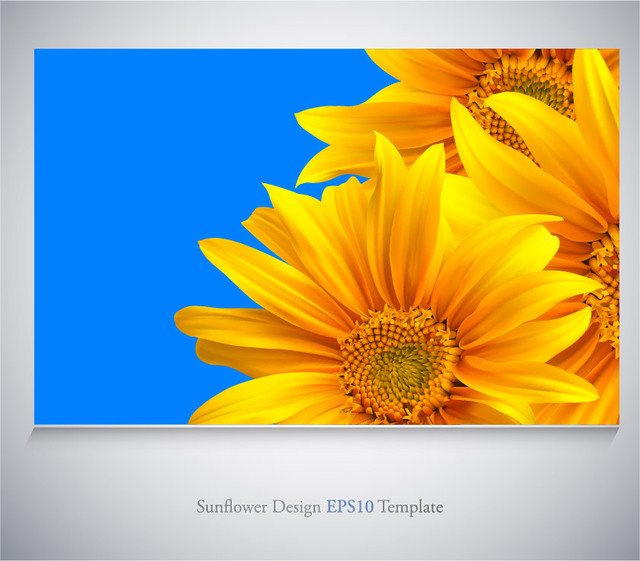 Free Realistic Sunflowers on Blue Background