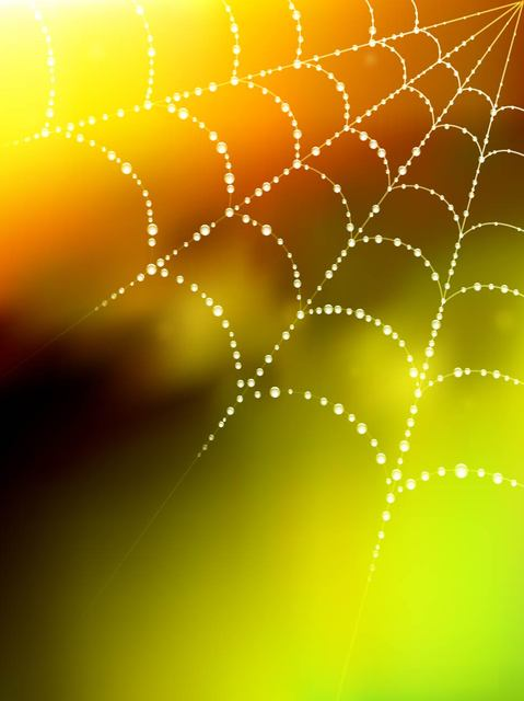 Free Glowing Spider Web Blurry Background with Droplet