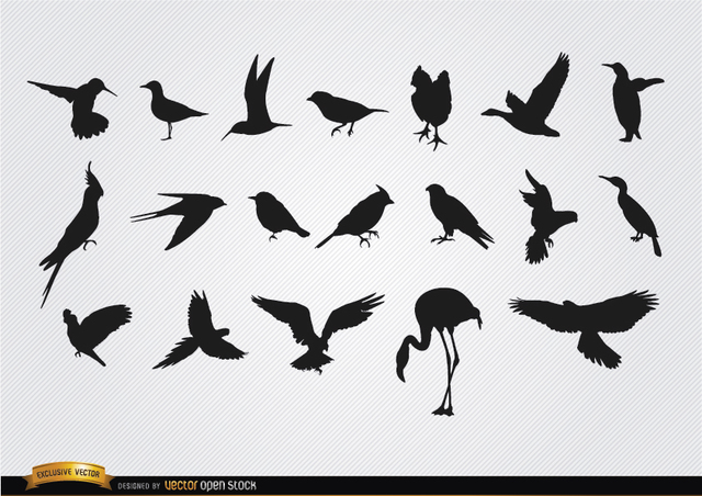 Free Species of birds silhouettes set