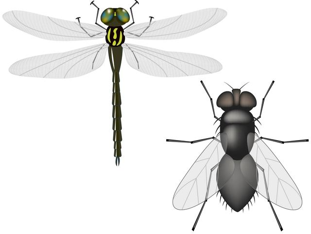 Free Vectors: Flying Insects | Great