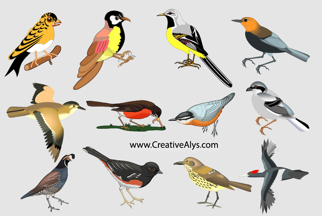 Free Realistic Colorful Bird Pack