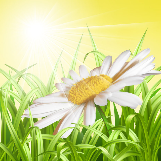 Free Detailed Daisy Floral Sunny Background