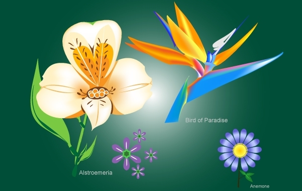 Free Flower Pack with Bird of Paradise