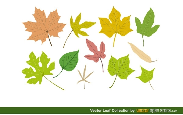 Free Vector Leaf Collection