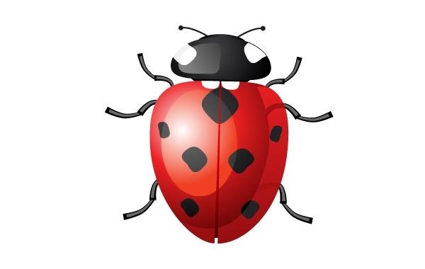 Free Vector Ladybug