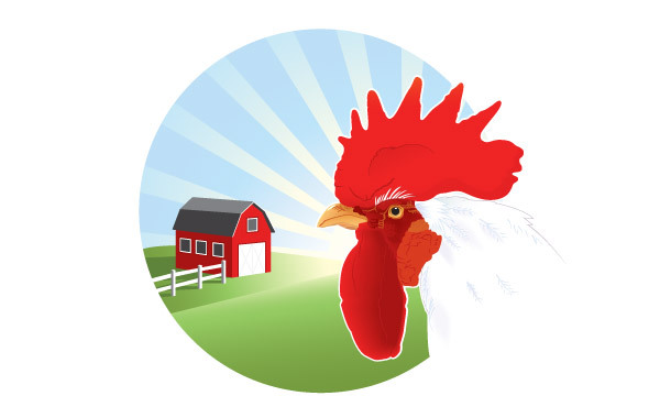 Free Free Vector Rooster