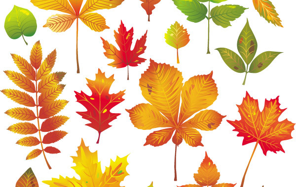 Free Autumn Leaves Vector 1