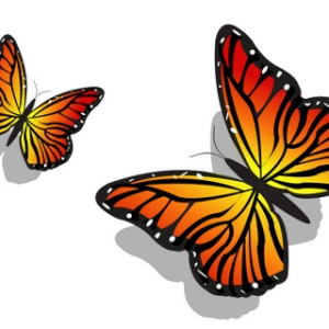 Free Pair of Colorful Butterflies