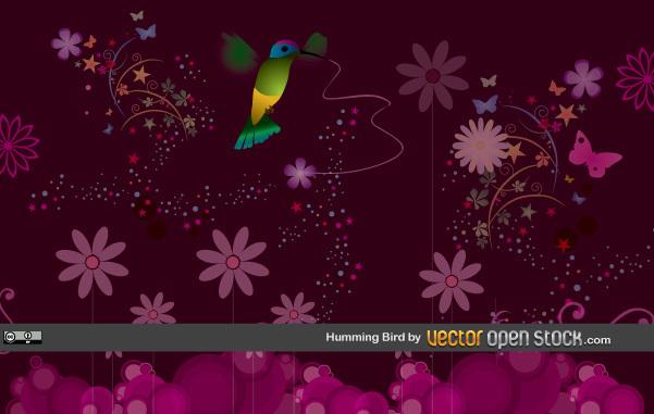 Free Humming Bird