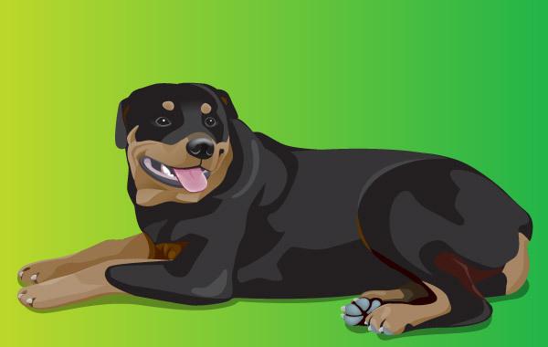 Free Rottweiler 1