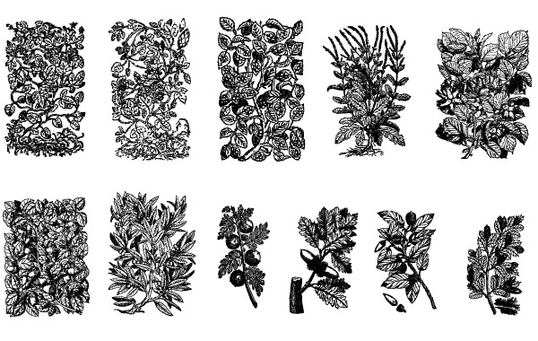 Free 11 Old Plant Engravings Vector
