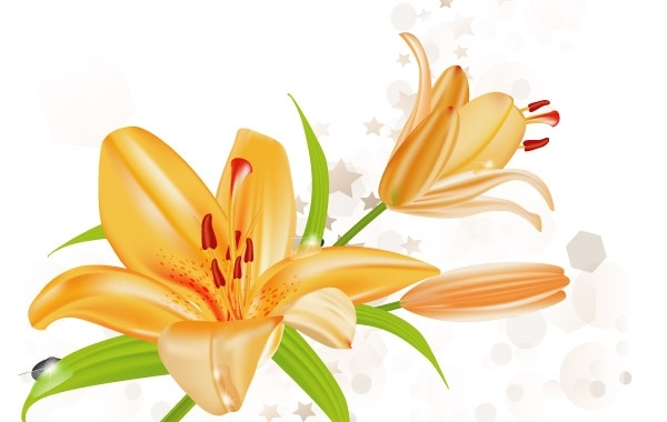 Free Lily Vector Illustration