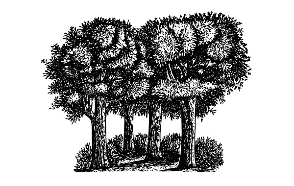 Free Group Of Trees clip art