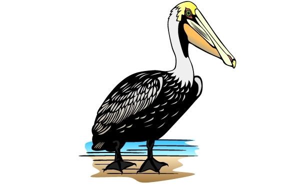 Free Pelican clip art