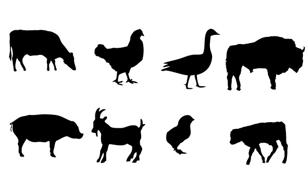Free Farm animals Vector graphics