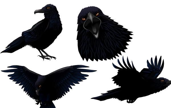 Free Dark Twitter Bird